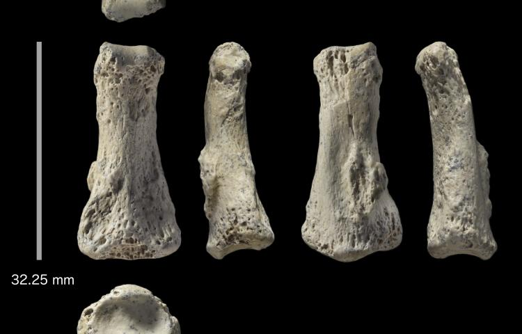 This photo provided by Michael Petraglia shows six different views of a Homo sapiens fossil finger bone from the Al Wusta archaeological site in Saudi Arabia. In a report released on Monday, April 9, 2018, researchers say the bone provides a new clue about when and how our species migrated out of Africa, with hunter-gatherers reaching the Saudi Arabia area by 85,000 years ago. (Ian Cartwright/Michael Petraglia via AP)