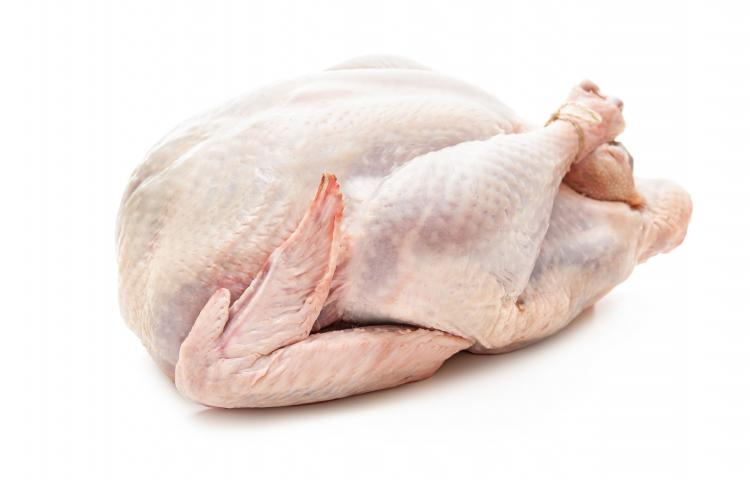 Uncooked turkey isolated on white background