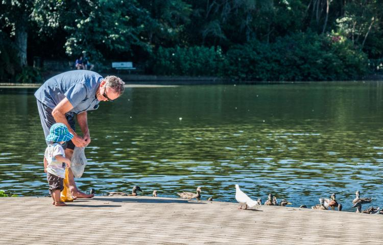 Hamilton, New Zealand - February 26, 2017: Family feeding the local ducks in Hamilton Gardens, New Zealand.