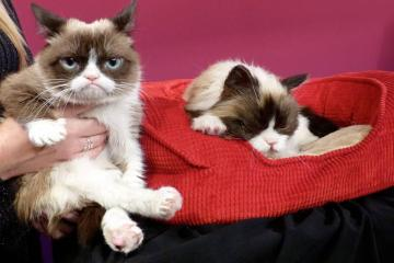 Interneticoon Grumpy Cat is overleden